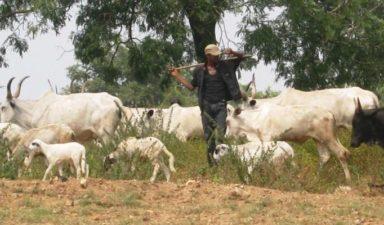 Victims of banditry, cattle rustling get N139 million from Zamfara Govt