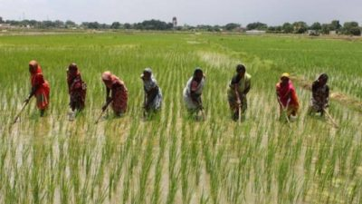 Expert says Sokoto's climate good for rice farming