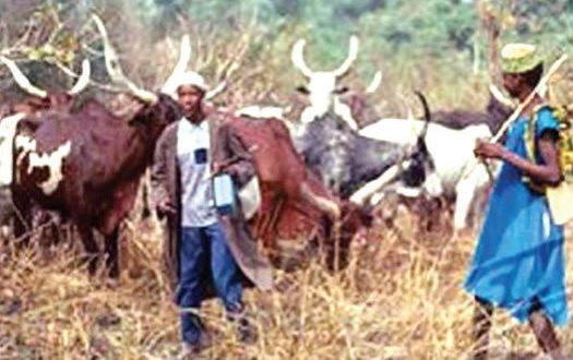 Herdsmen-in-Nasarawa-525x330.jpg