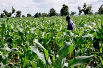 EU provides €45m support for agri-businesses in Nigeria, other African countries