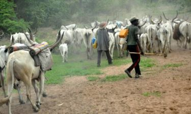 RUGA: Herders Group insists bandits, not Fulani herdsmen behind insecurity, warns Northern Coalition against call for herders vacation of South