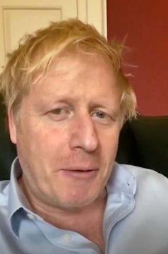 Boris-fi.jpeg